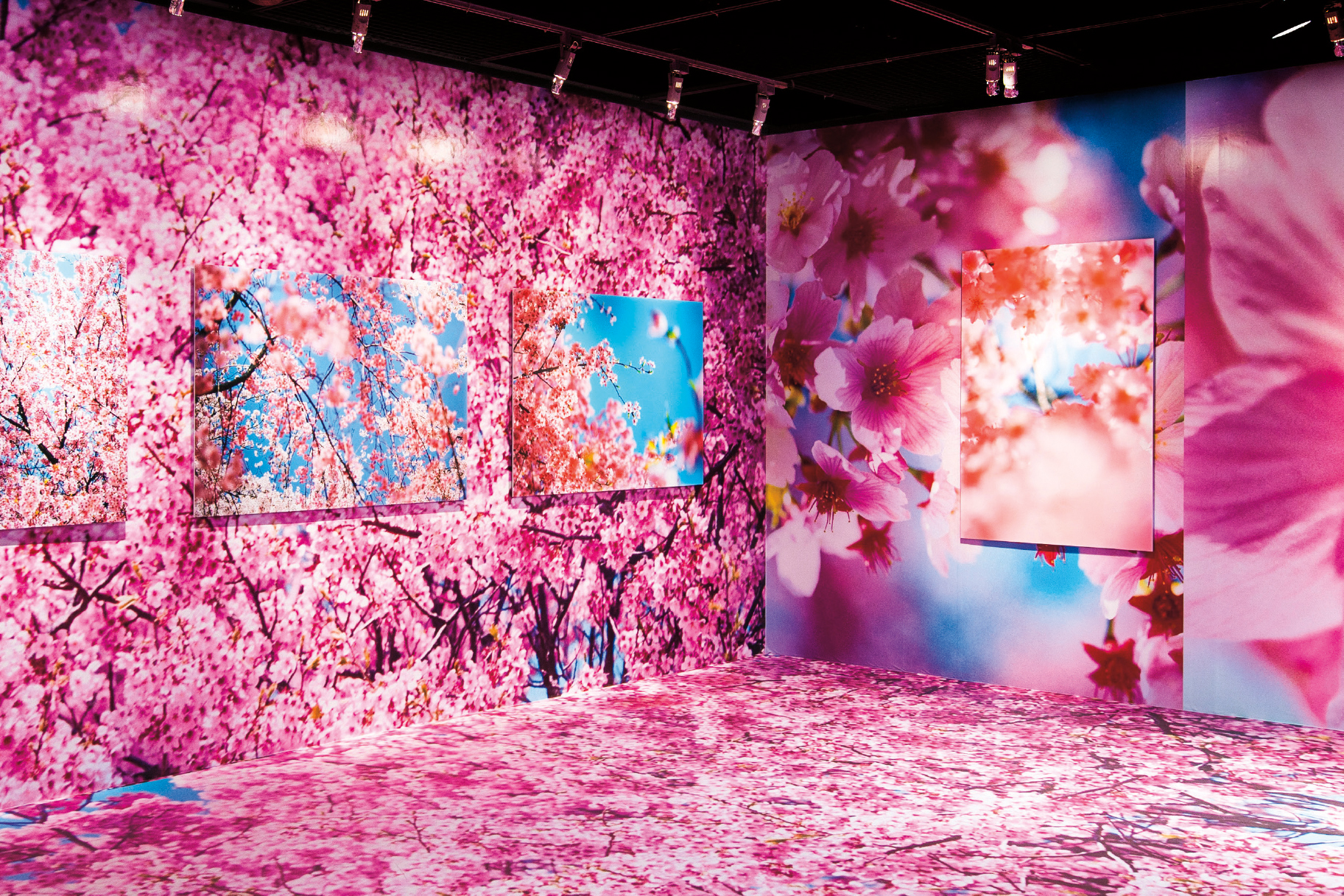 The vitality of fresh flowers explodes in Mika Ninagawa esibition in Taipei, 2016.